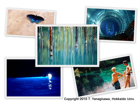 photo of Blue Pond, Biei